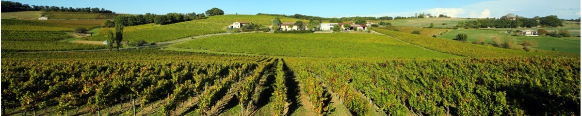 Gaillac wines and the Gaillac vineyard are over 1000 years old