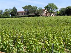 Domaine Vayssette and the Gamay vines