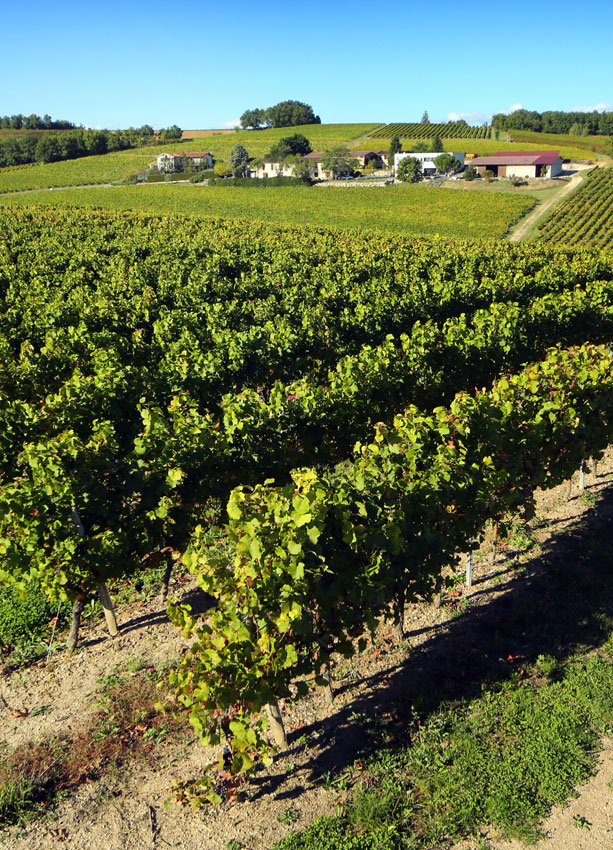 OUR DOMAIN : Discover a terroir and its exceptional grape varieties